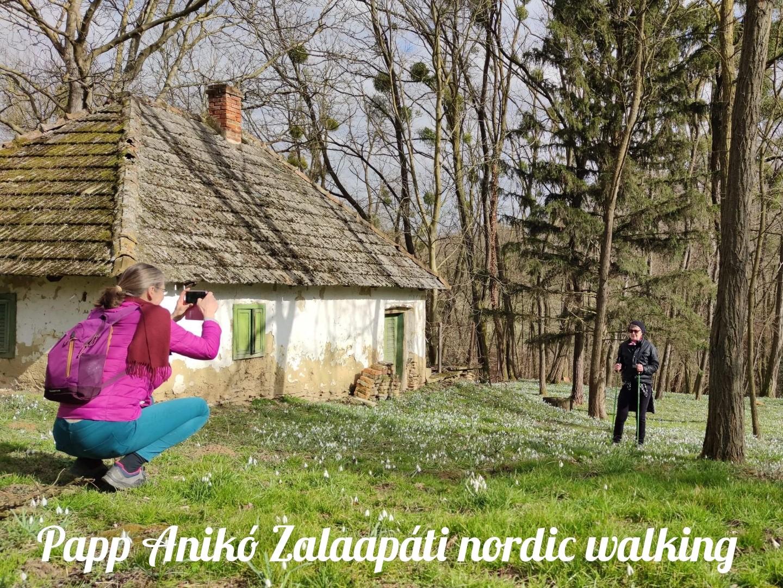 Zalaapáti hóvirág nézegető nordic walking túra
